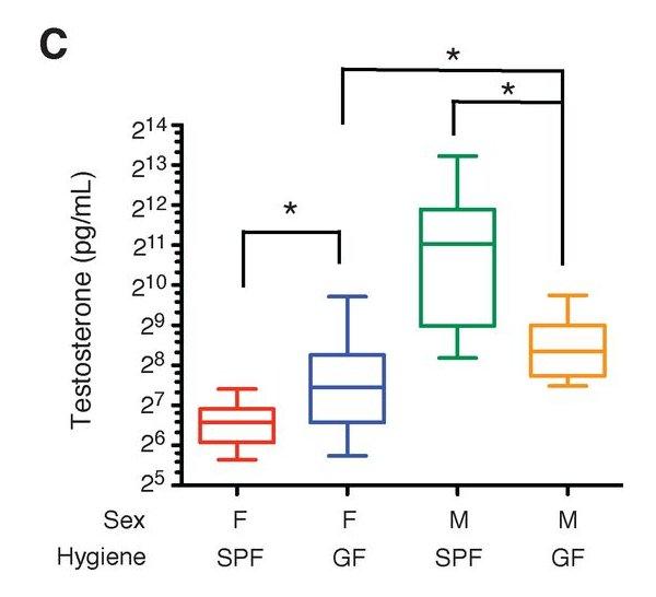 Рис. 4. Зависимость выработки тестостерона у мышей от условий их содержания — условий отсутствия патогенов (SPF) или же полностью стерильных условий (GF). Видно, что у самцов (M) вырабатывается больше тестостерона при содержании в условиях отсутствия патогенов, а у самок (F) — в стерильных условиях. Рисунок из обсуждаемой статьи в Science